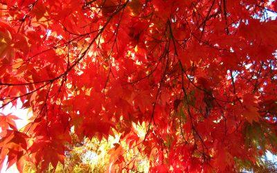 An Autumn Meditation