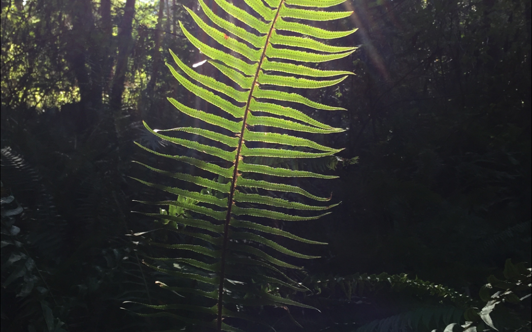 Alignment and An Ecstatic Frond!